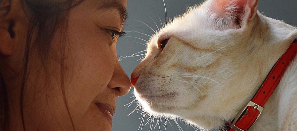 woman-and-cat-nose-to-nose
