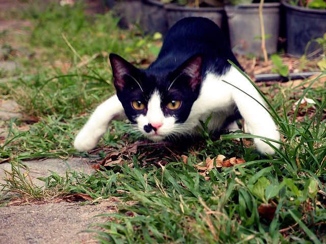 pet behave training spray