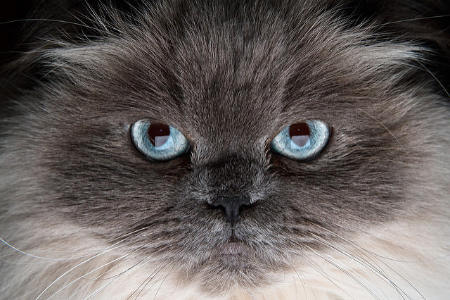 6 Facts About Feline Herpes
