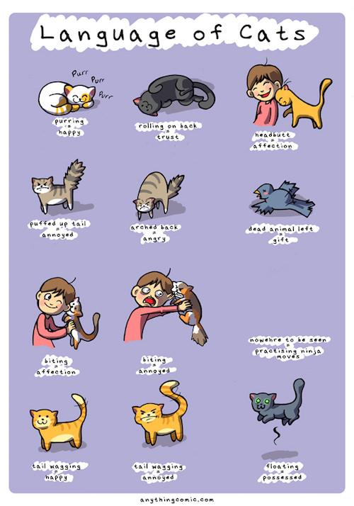 C Language of Cats 4