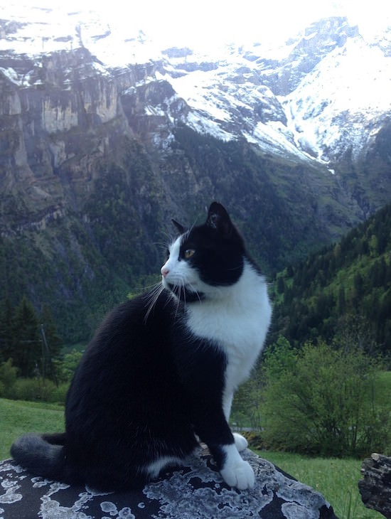 Swiss Kitty 4