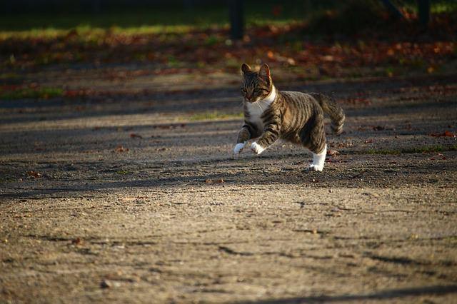cat-1034090_640