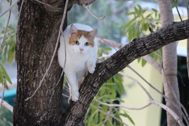 cat-1163549_1280