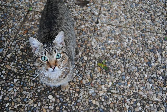 cat-1209958_640