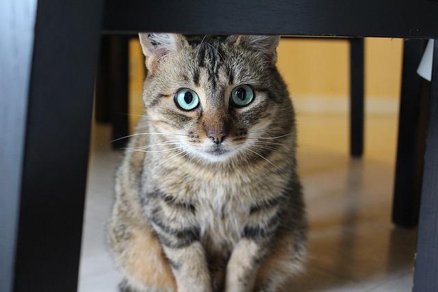 cat-1297001_640