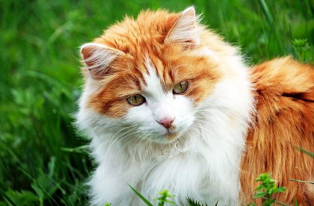 cat-1318434_640