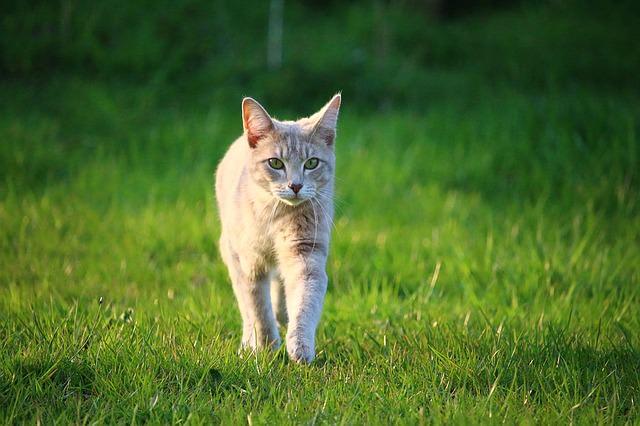 cat-1325307_640