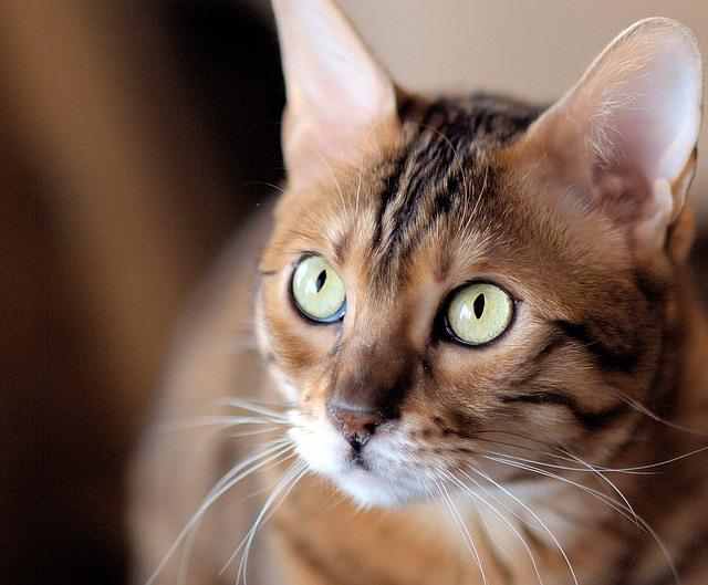 cat-1329622_640