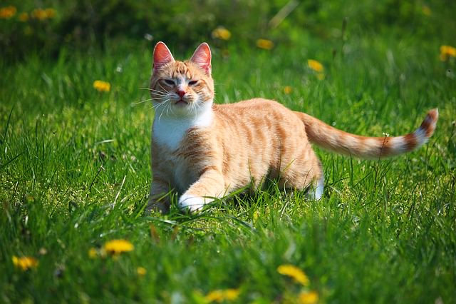 cat-1366123_640