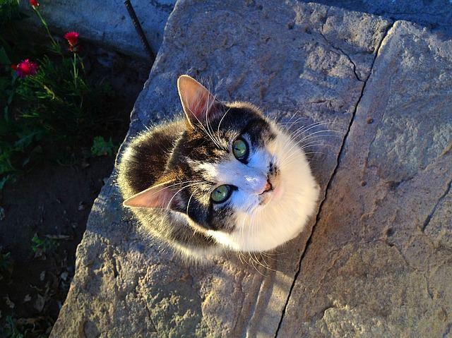 cat-1472283_640