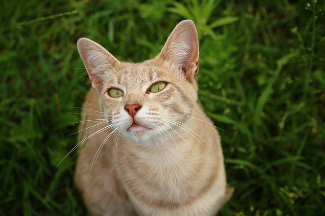 cat-1516457_640