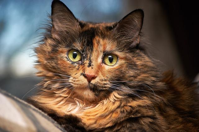 cat-1539121_640