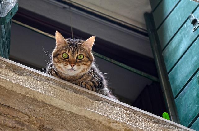 cat-1578865_640