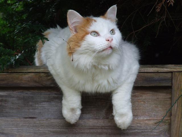 cat-1581688_640