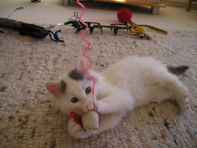 cat-555_640