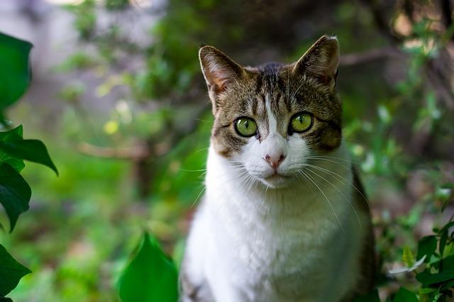 cat-725793_640