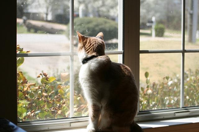 cat-726023_640