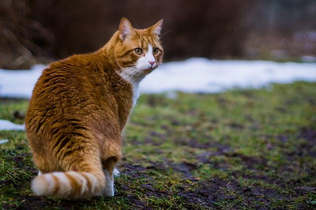 cat-775393_640