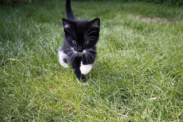 cat-832593_640