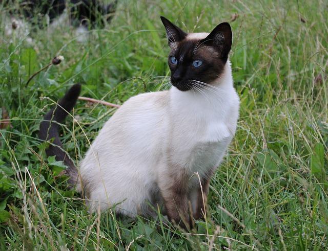 cat-889476_640