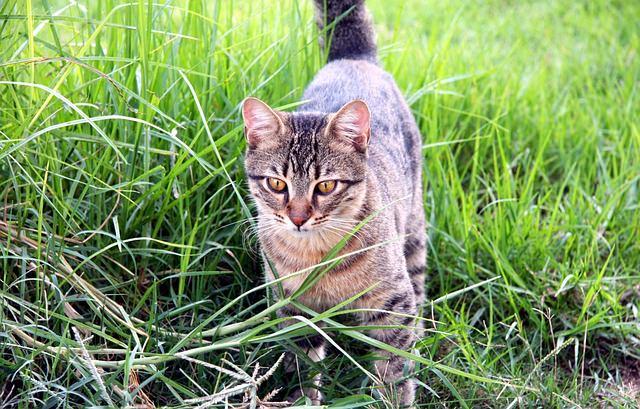 cat-88996_640