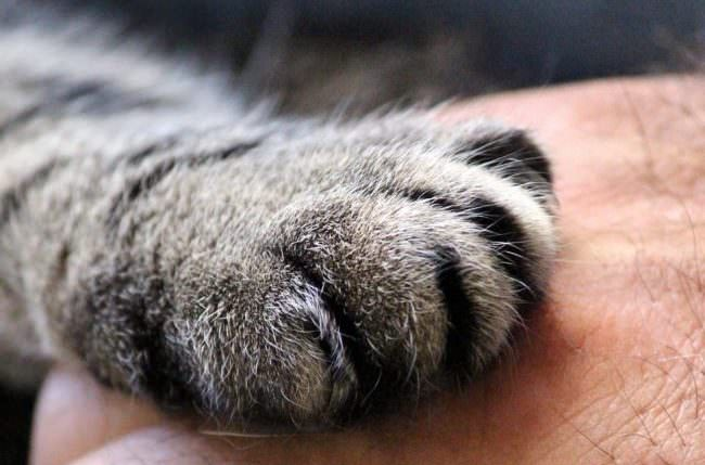 cats-paw-1375792_1280