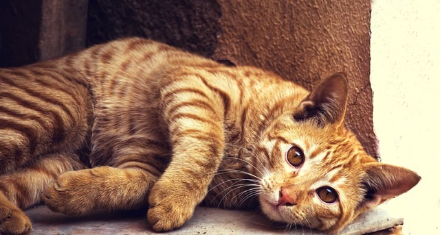 7 Fun Facts About Orange Tabby Cats