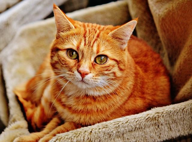 8 Fun Facts About Tabby Cats