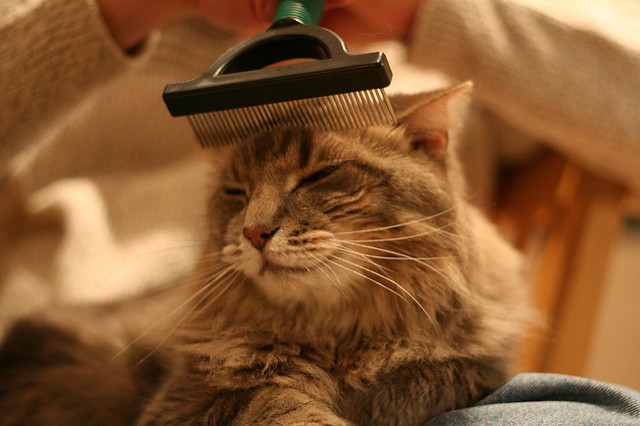 reduce matting by grooming your cat