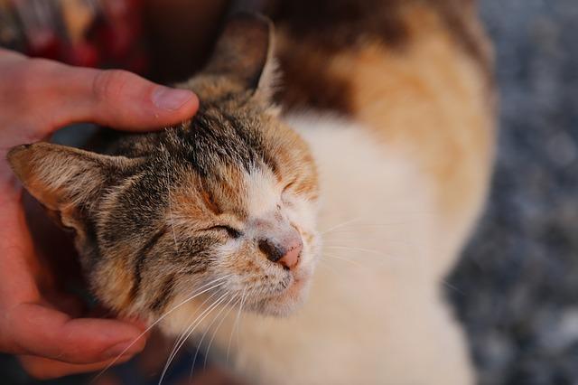 cat-1052652_640