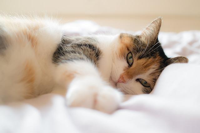 cat-1058095_640
