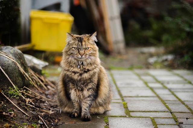 cat-1397387_640