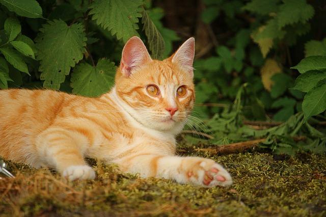 cat-1411463_640