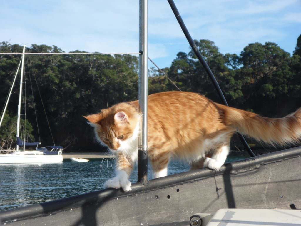 skatty-boat-cat-fancy-footwork-above-decks-1024x768