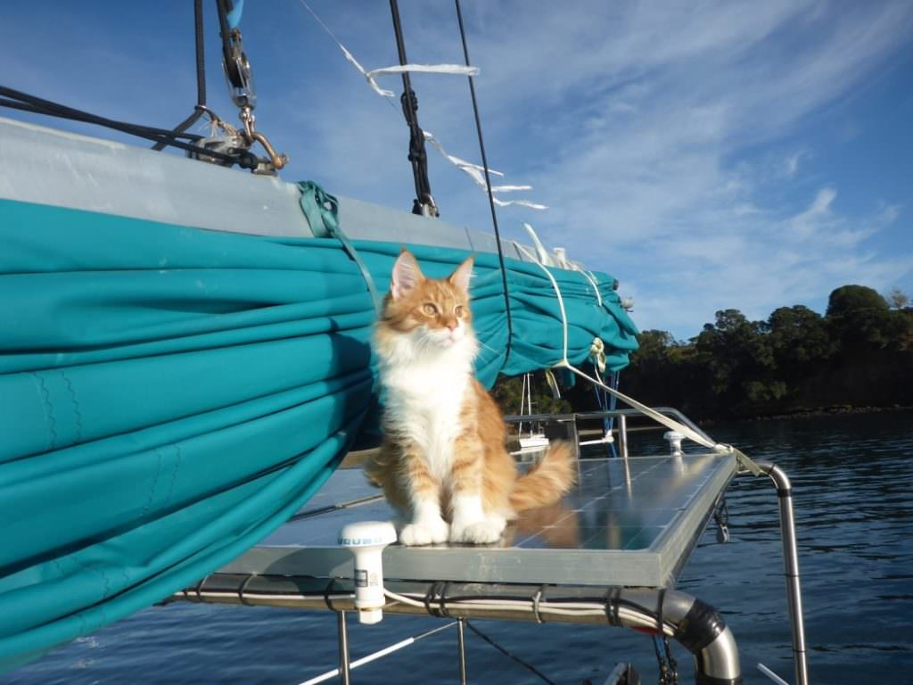 skatty-boat-cat-on-solar-panels-1050x788