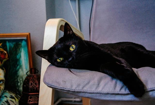 black-cat-451269_640