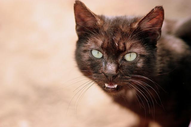 cat-1265885_640
