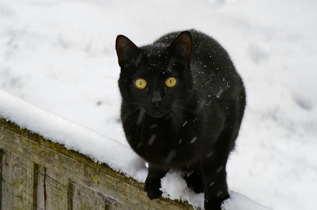 cat-141203_640
