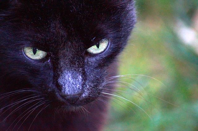 cat-1635847_640