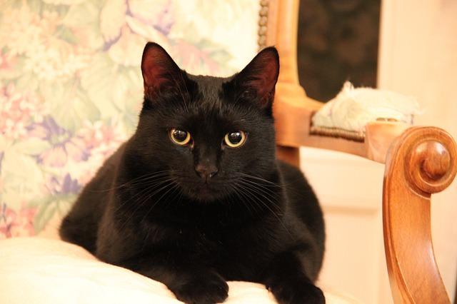 cat-1648746_640