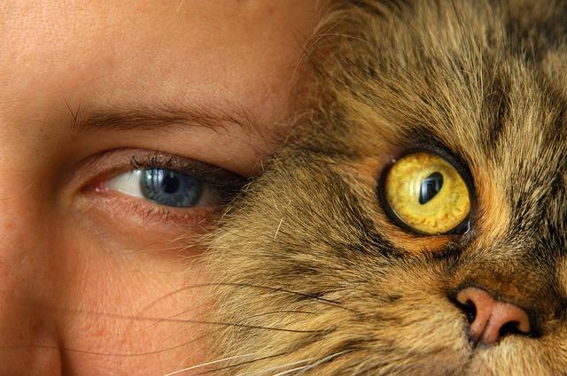 cat-757843_640