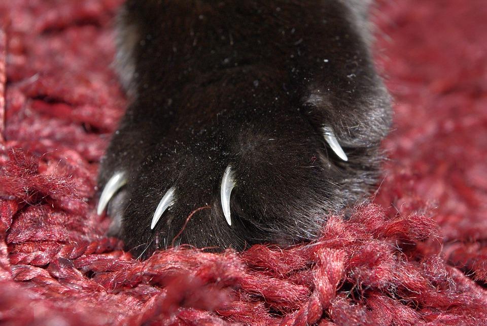 cat-claw