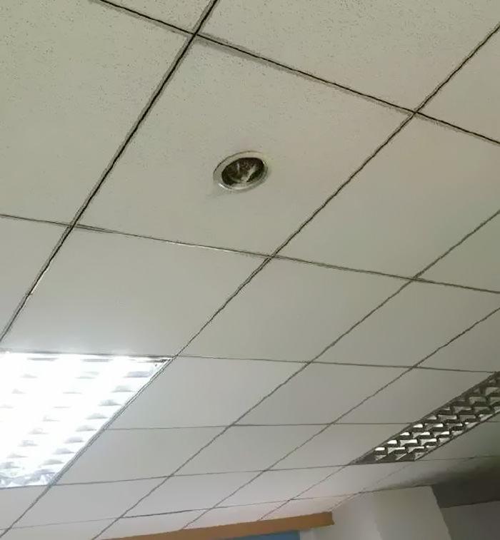 office-ceiling-cat-monitoring-omocha-no-uma-1