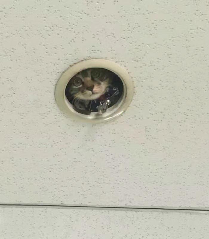 office-ceiling-cat-monitoring-omocha-no-uma-2