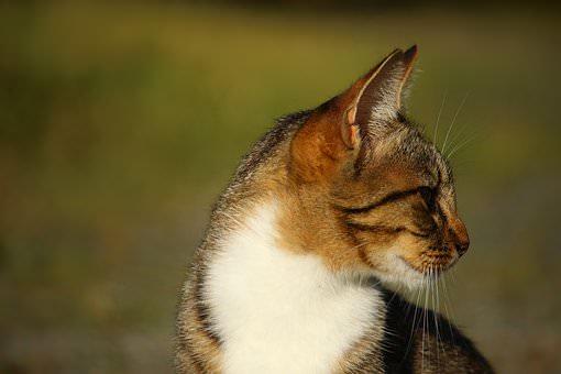 cat-look-away2