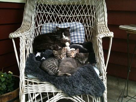 cat-mom-1265693__340