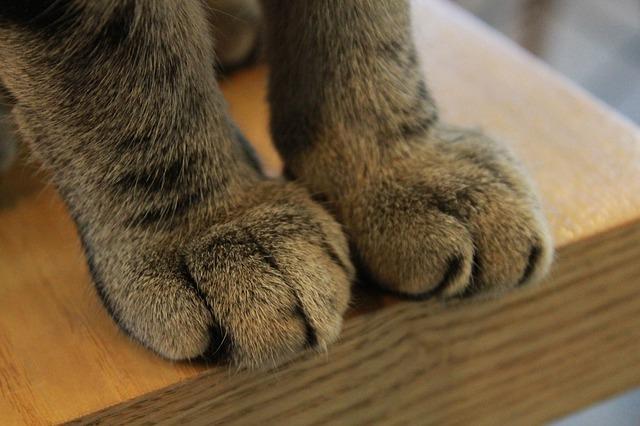 paws-340071_640
