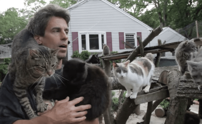 Man Creates A Sanctuary For Homeless Cats In Honor Of The Son He Lost