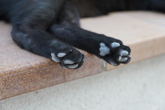 cat-1514834_640