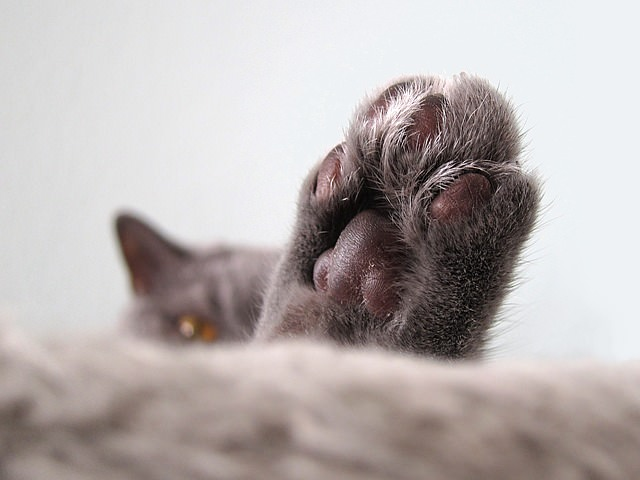 3 tips for caring for your cat's paws
